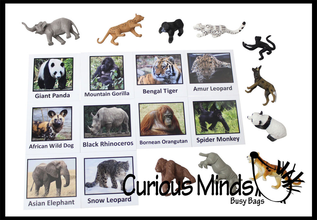 Montessori Endangered Species Animal Match - Miniature Animals with Matching Cards - 2 Part Cards.  Montessori learning toy, language materials