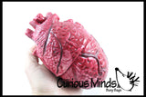 Large Anatomical Heart Squishy Stress Ball - Body Parts - Anatomy - Doctor Gift Medical