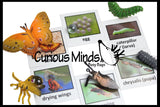 Frog (or Butterfly) Life Cycle Learning Set - Animal Figures with Matching Cards - Montessori Educational Toy