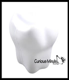 Tooth Stress Balls - Office, Teeth, Med Student Anatomy Dentist Dental Hygienist Pediatric