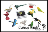 Animal Match - EXOTIC TROPICAL BIRDS - Miniature Animals with Matching Cards - 2 Part Cards.  Montessori learning toy, language materials