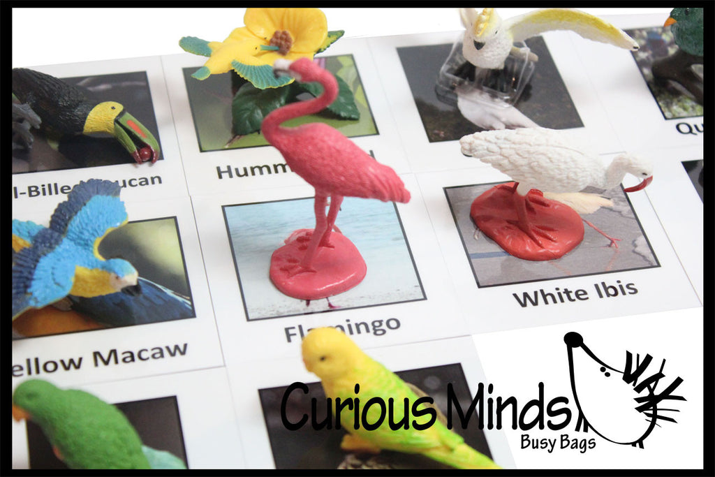 Montessori Exotic Bird Animal Match - Miniature Animals with Matching Cards - 2 Part Cards.  Montessori learning toy, language materials