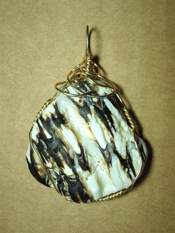 Shell Pendant, Murex, Wire Wrapped 14/20 Gold Filled