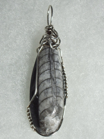 Orthoceras Fossil Pendant Wire Wrapped .925 Sterling Silver - Jemel