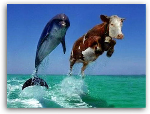 Cow and dolphin jumping out of the water surf & turf