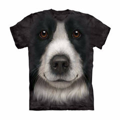 Unique Staring Border Collie