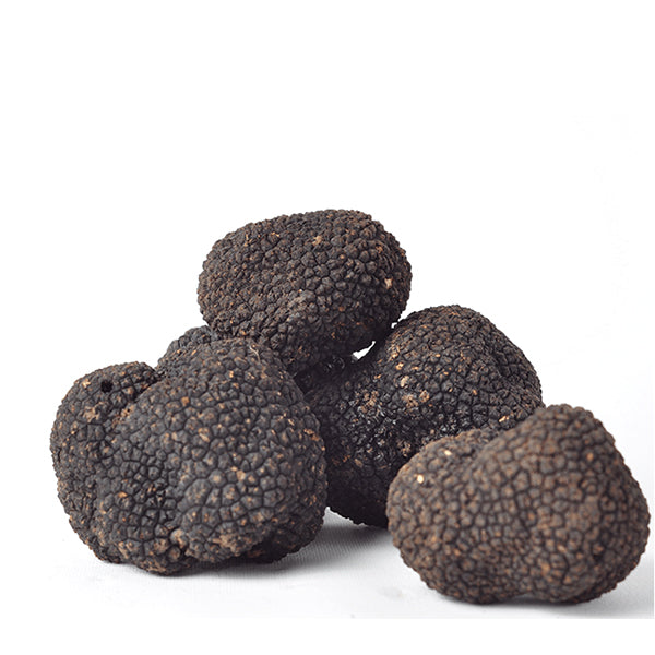 Fresh Black Truffle-Tuber Uncinatum (Selling season: September - January) - Zigante Tartufi Online Shop, Truffle Shop, Truffle Products