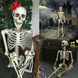 ZYMOTIC B2B Skeleton Life Size - Zymotic