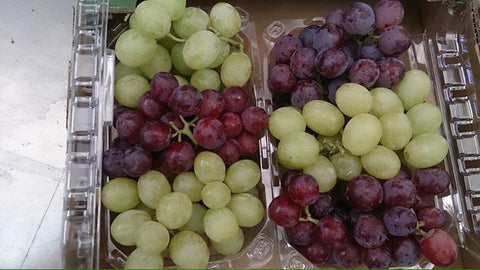 Zymotic Republic Fruit` Grapes Red and Green Combo - Zymotic