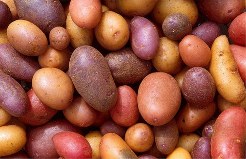 Zymotic Republic Vegetable` Potato - Zymotic