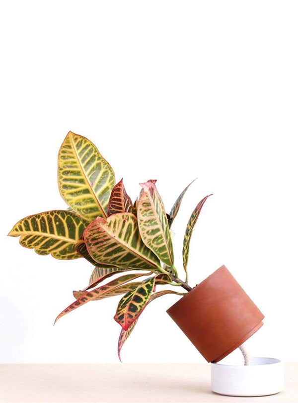 ciel mon radis Living room Jeannot self-watering plant pot