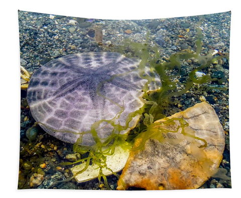 Dollar and a Half Sand Dollar Wall Tapestry