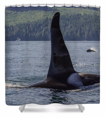 Orca So Close Shower Curtain
