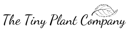 The Tiny Plant Company