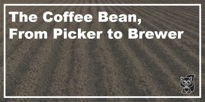 The Coffee Bean, From Picker to Brewer