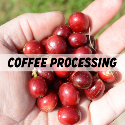 Coffee Processing Methods