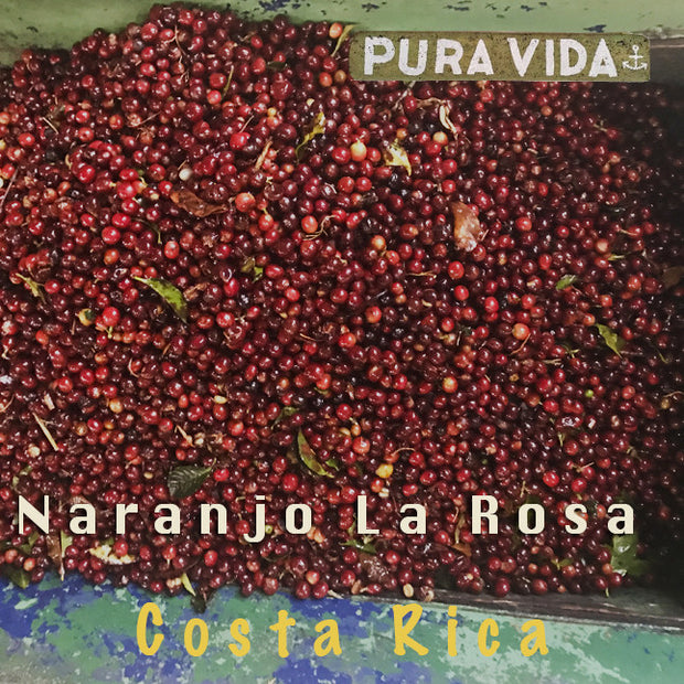 Costa Rican Naranjo La Rosa - Medium Roast Coffee
