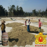 coffee washed myanmar ywangan micro-lot producer exclusive by koffee kult
