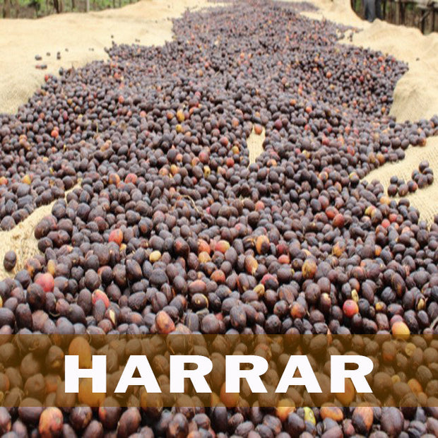 Ethiopian Harrar Coffee