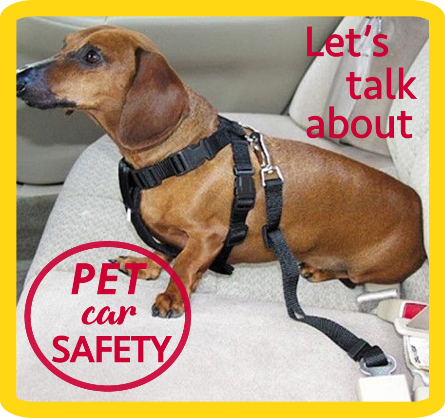 Protect the ones you love! Pet car safety - Part 1.