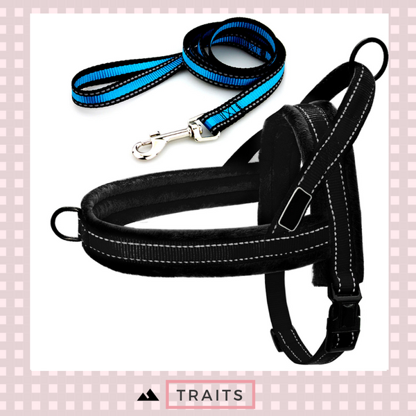 ^Easy To Walk^ Dog Front and Back Clip Harness and Leash Set - No-Pull, No-Choke with Reflective Trim and Soft Handle