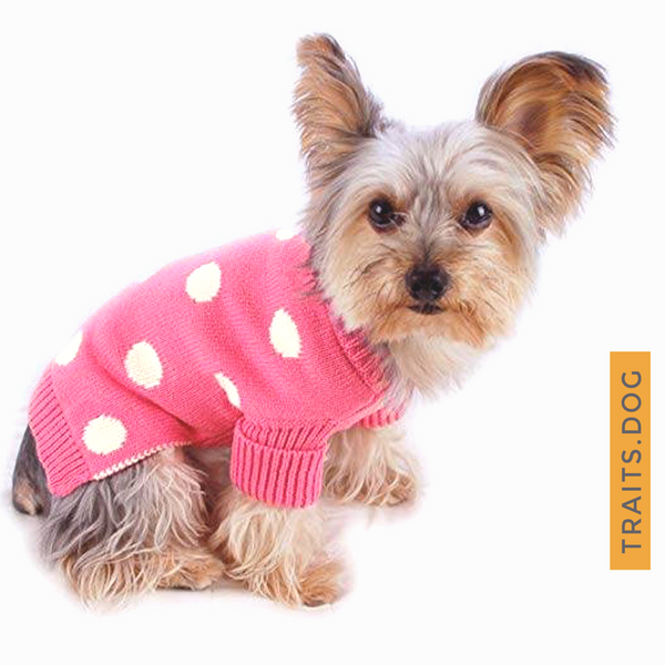 Soft, well-made and adorable Pink Polka Dot Dog Cat Sweater for small breeds. Keeps your dog, cat or other pet warm this holiday season or throughout the year. Comfortable and super coz