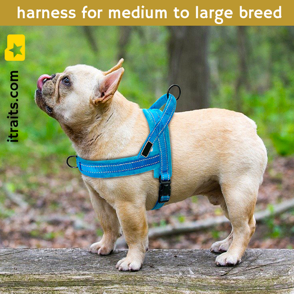 Easy To Walk Set - Reflective Dog or Cat Dual Clip Harness with Soft Handle and Leash Set