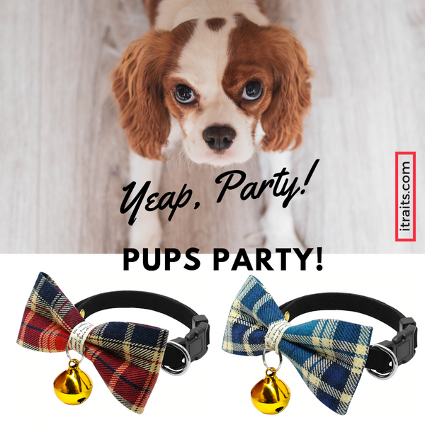 A beautifully handmade Classic Plaid Bowtie collar for your small dog, cat or other four-legged friend: perfect for special occasions, decorated with a cute bell, makes your pup pop at any celebration, wedding or get together.