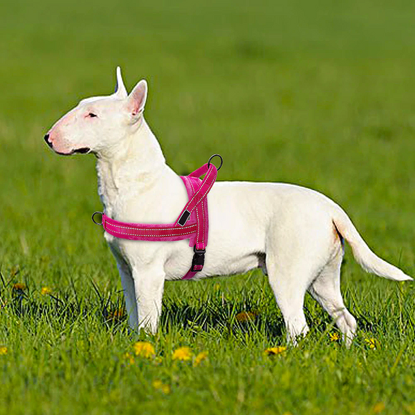 Reflective Dog's Dual Clip Harness with Soft Handle and Leash Set - No-Pull, No-Choke, Soft Padded with Reflective Trim and Soft Handle for medium to large breed.
