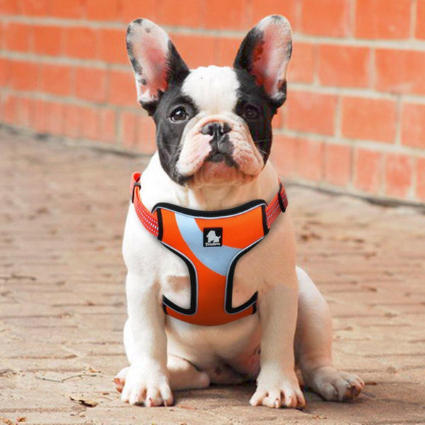 Well-constructed Reflective Dog's Vest Sport Vest Harness is made of premium quality, weatherproof materials and durable hardware. No pull, No choke - Safe, comfortable, convenient and durable for walking, running, hiking and riding in vehicles. NOT RECOMMENDED FOR DOGS UNDER 10 lbs.