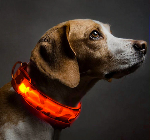 Light Me Up - LED Glow Adjustable Camouflage Dog Cat Collar for Night Visibility