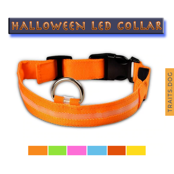 Light Me Up - LED Glow Adjustable Dog Cat Collar for Night Visibility