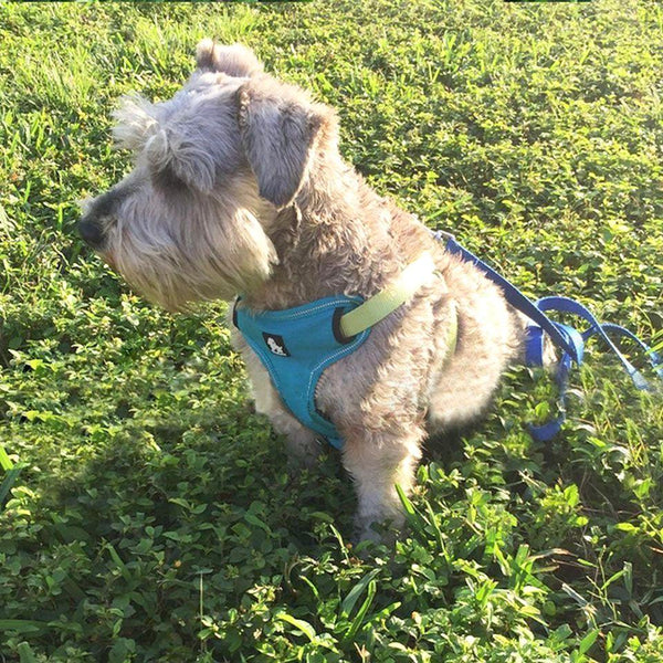 Dog Harness - No-Pull, Adjustable, Soft Padded with Reflective Trim