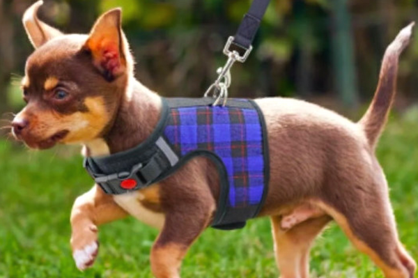 Super Soft with mesh lining this Naughty Plaid Vest Harness and Leash Set is made for Small Dog and Cat. Escape-proof buckle is for naughty wigglers.