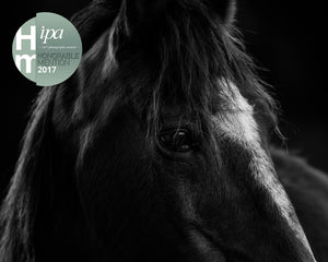 Point Reyes Morgan Horse, IPA Awards Honorable Mention