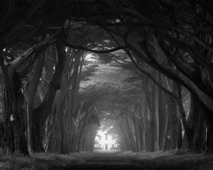 Point Reyes National Seashore Photograph, Cypress Tree Tunnel