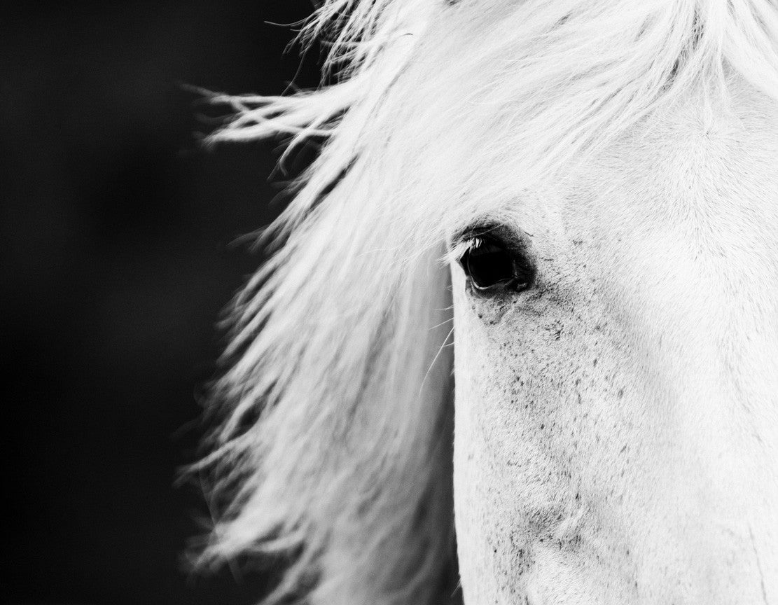 Jaw Dropping Black White Horse Photos Cowboy Magic Cowboy Magic