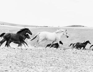 Wild horses — Black and white photograph by Cardelucci