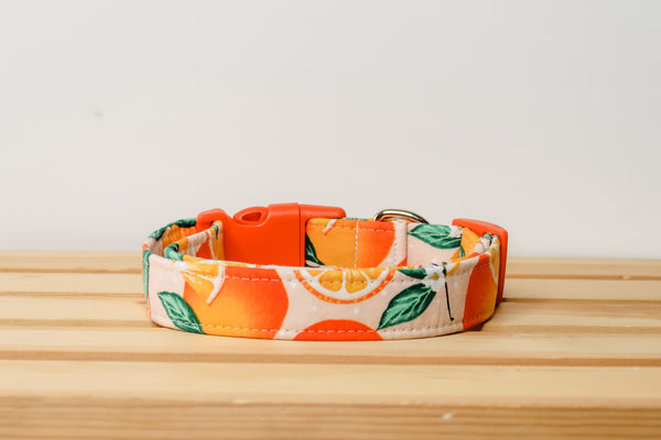 """The Valencia"" Dog Collar"