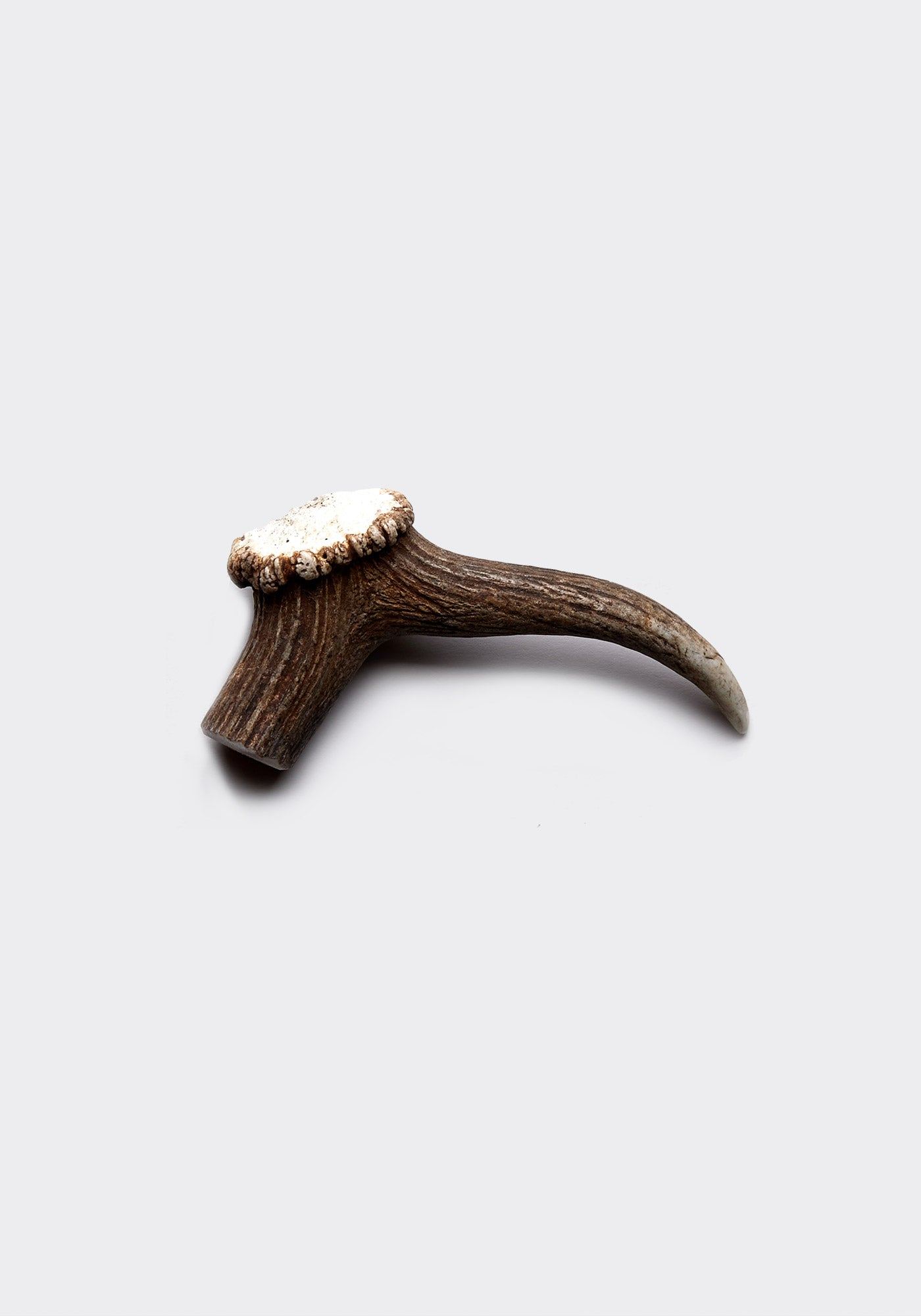Deer antler large (single)