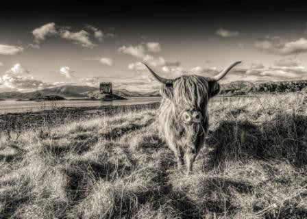 Card - Highland Cow by Castle Stalker - sepia