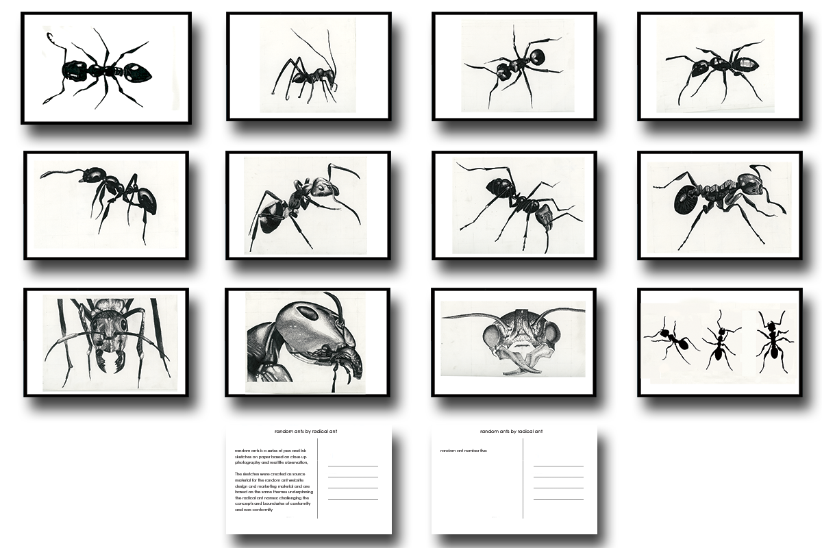 postcard pack - random ants limited edition