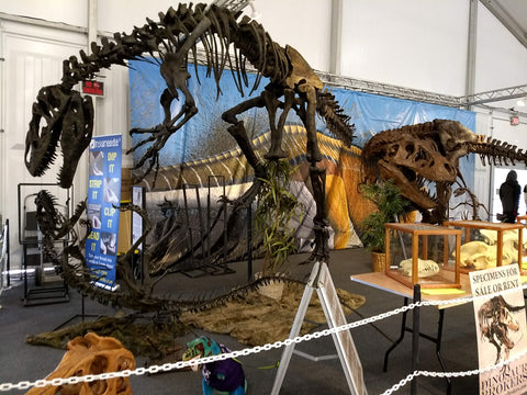 Is this a T. Rex?  at the 22nd Street Mineral and Fossil Show in Tucson