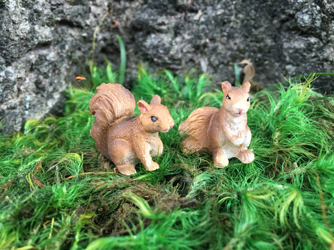 Squirrel miniature