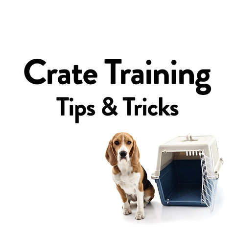 Dog Crate Training Tips & Tricks