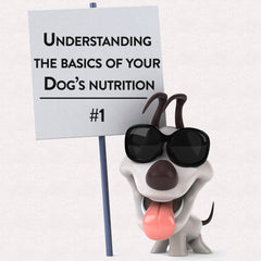 Understanding The Basics of Your Dog's Nutrition