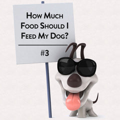 Blog #3 - How Much Food Should I Feed My Dog