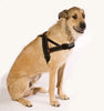 EzyDog Quick-Fit Harness | Accessories - 9