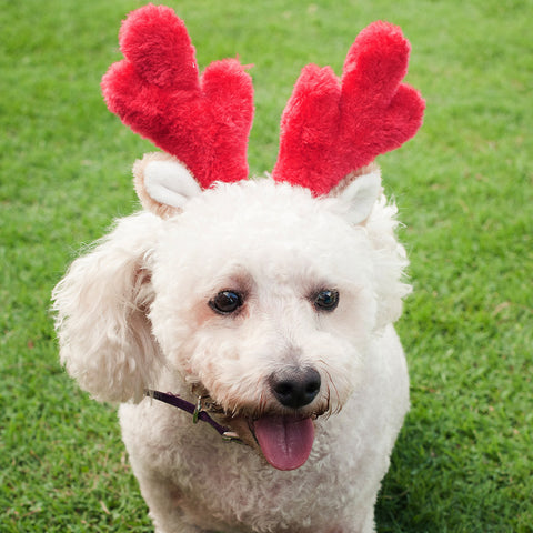 Zippypaws Christmas Specials - Antlers | Fashion - 2