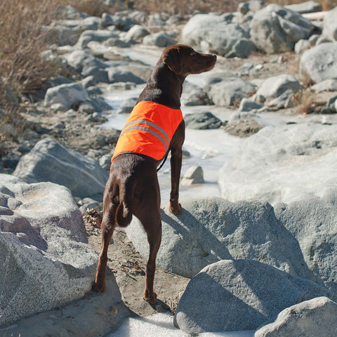 Zippypaws Cooling Safety Vest | Accessories - 1